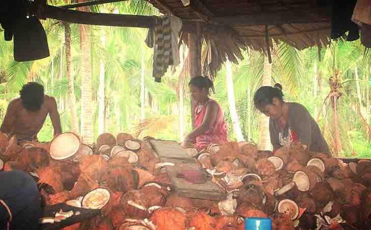 Uso del coco